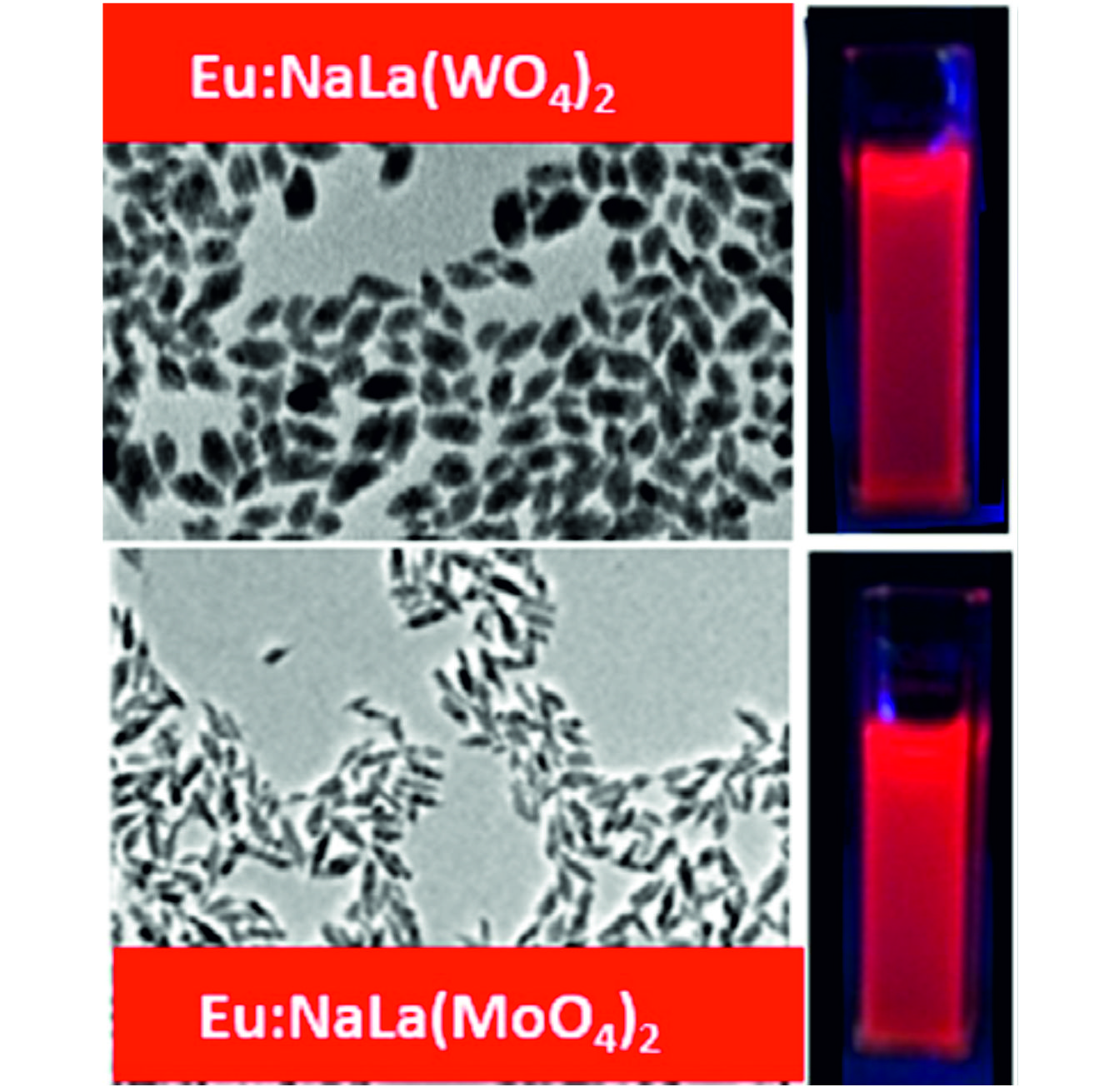 Synthesis, functionalization and properties of uniform europium-doped probes for bioimaging
